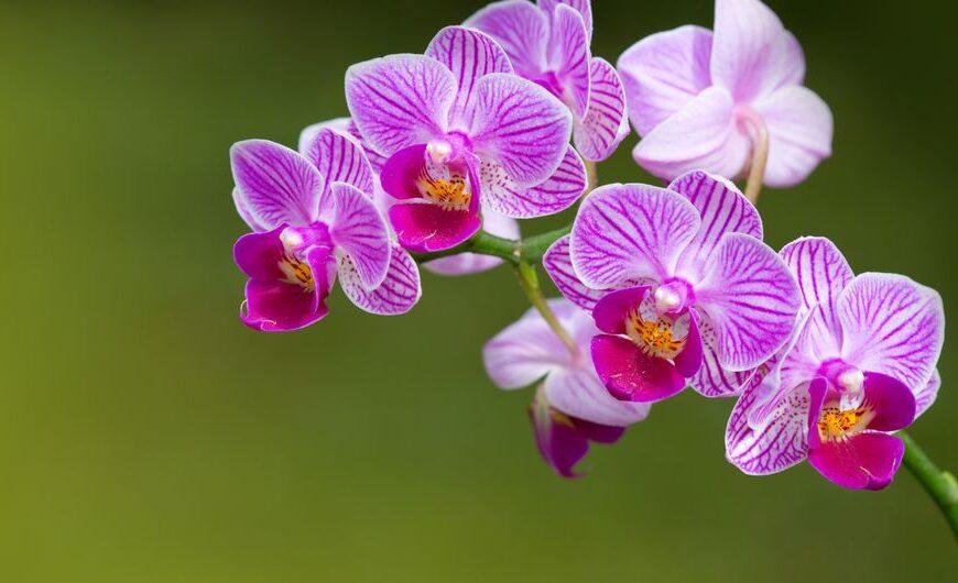Progetto La Casa delle Orchidee,  l'intervista su Radio Spazio Noi – In Blu